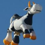 балон крава