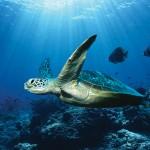Световен ден на океана