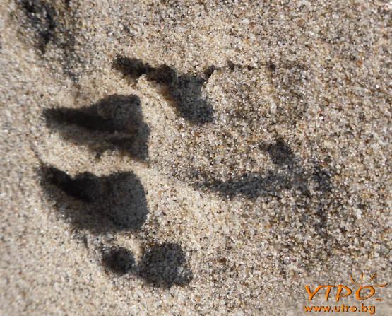 следа в пясъка
