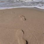 Стъпки по брега