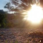 Слънчева история с пчели и макове