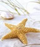 Историята на една морска звезда