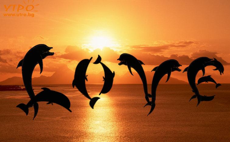 любов делфини