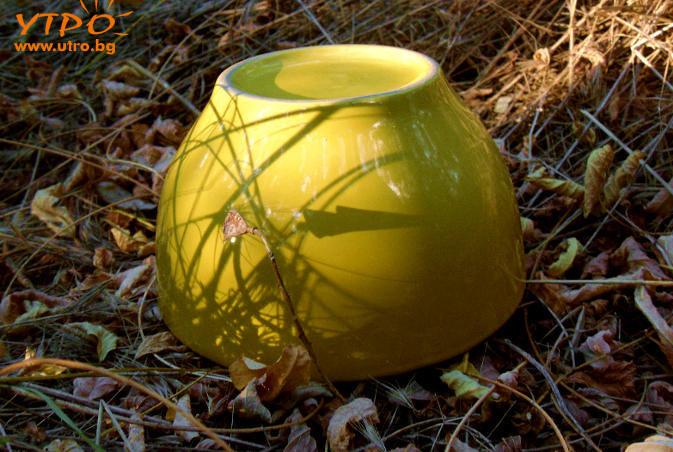 sun-cup