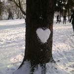 Сърцето на едно дърво в парка …