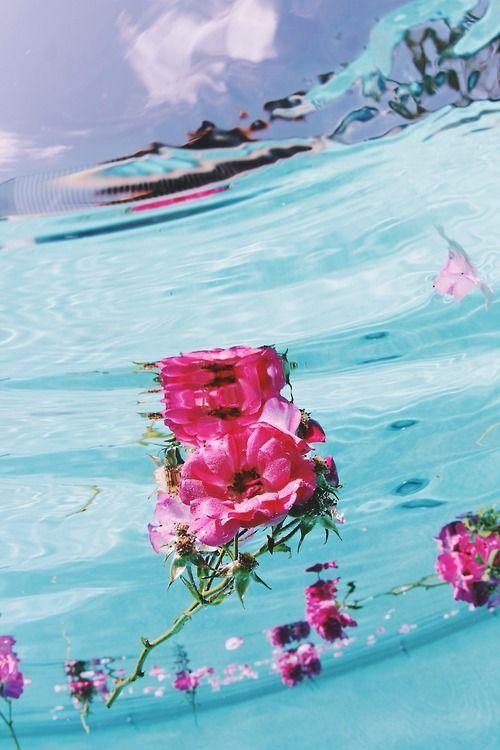 цветя море хаваи