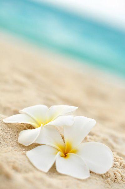 цветя на хавайския бряг