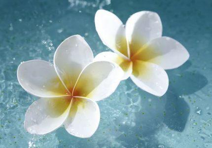 екзотични цветя
