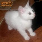 Котенца от Варна си търсят дом
