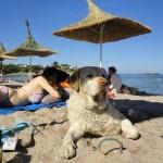 Разкош на плажа
