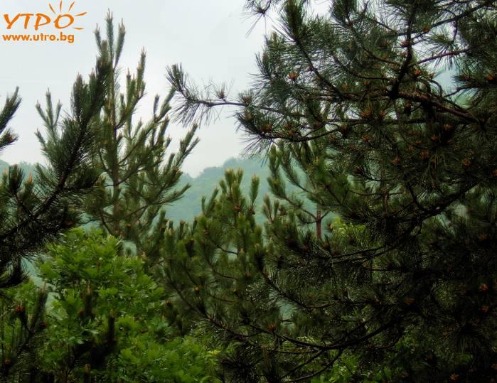 борова гора
