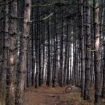 с велосипед в гората