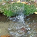 бистра вода