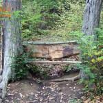 пейка в гората