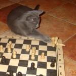 Шах мания