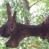 Илюзия сред дърветата