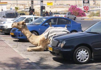 Паркинг, кола, коли, камила