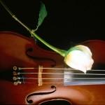 Цветята и музиката