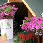 изложба на декорация на цветя