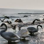 Черно море празнува