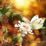 Полет на пеперудени крила