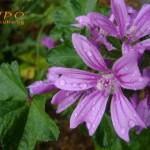 цветя - Дъждовна нежност