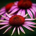 Сред красотата на цветята